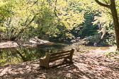 Downstream of Harper's Meadow, Philadelphia